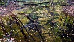 仲道池の幻像