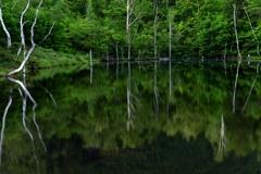 万緑の朝池