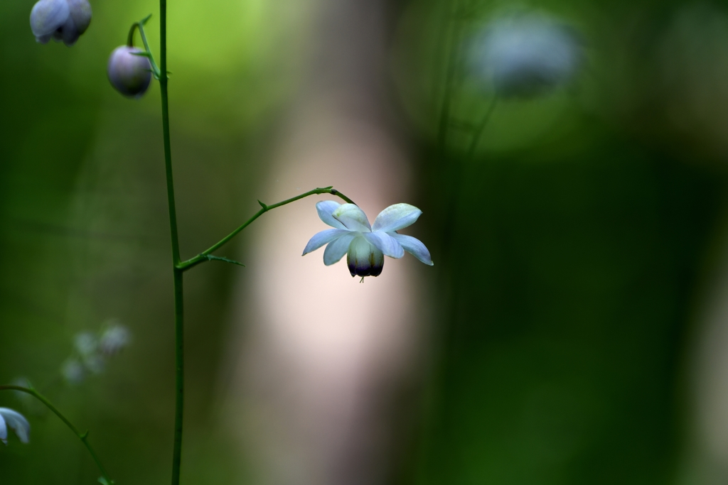 Flower bell ring in the forest