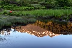 池塘のめざめ