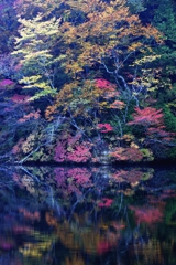 秋 艶 ふⅡ