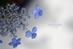 Pale blue melancholy