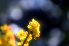 春 連 環