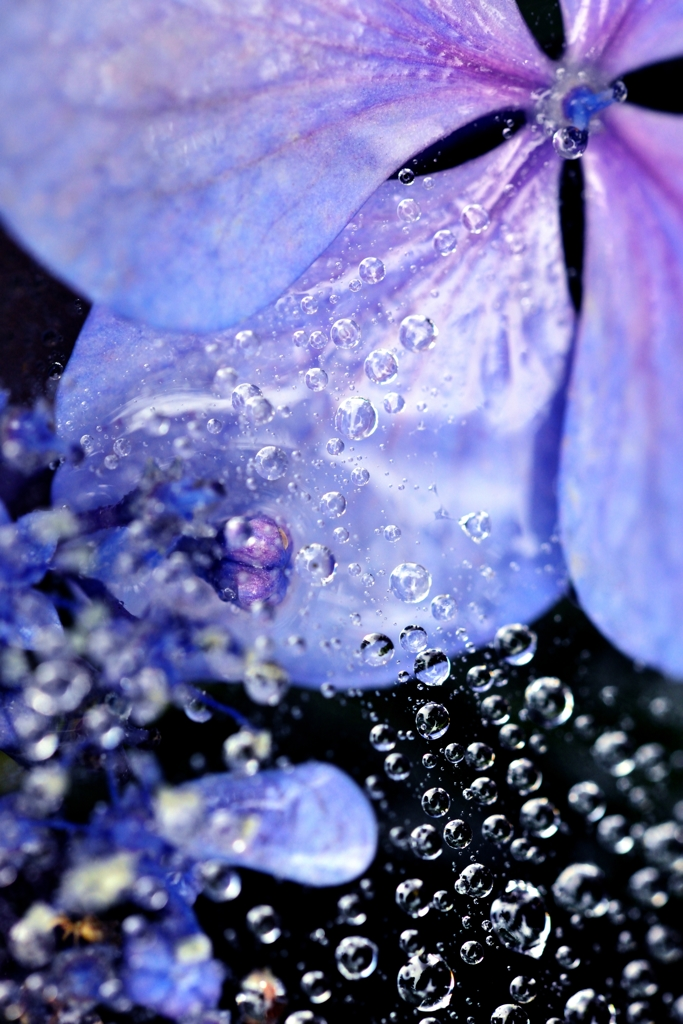 雨中の花宇宙