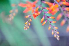 虹色に咲く