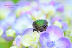 美花と野虫