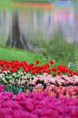 七色のチューリップの園