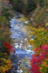 天然岩魚をシカ(志賀)する川