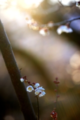 春方の光川