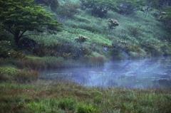 朝朧開けの湿原