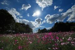 追慕の花の丘