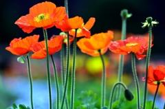 春の煌めきに「感謝」