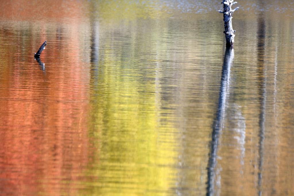 爽秋の立ち枯れ木