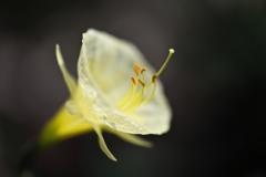 春の肖像Ⅰ