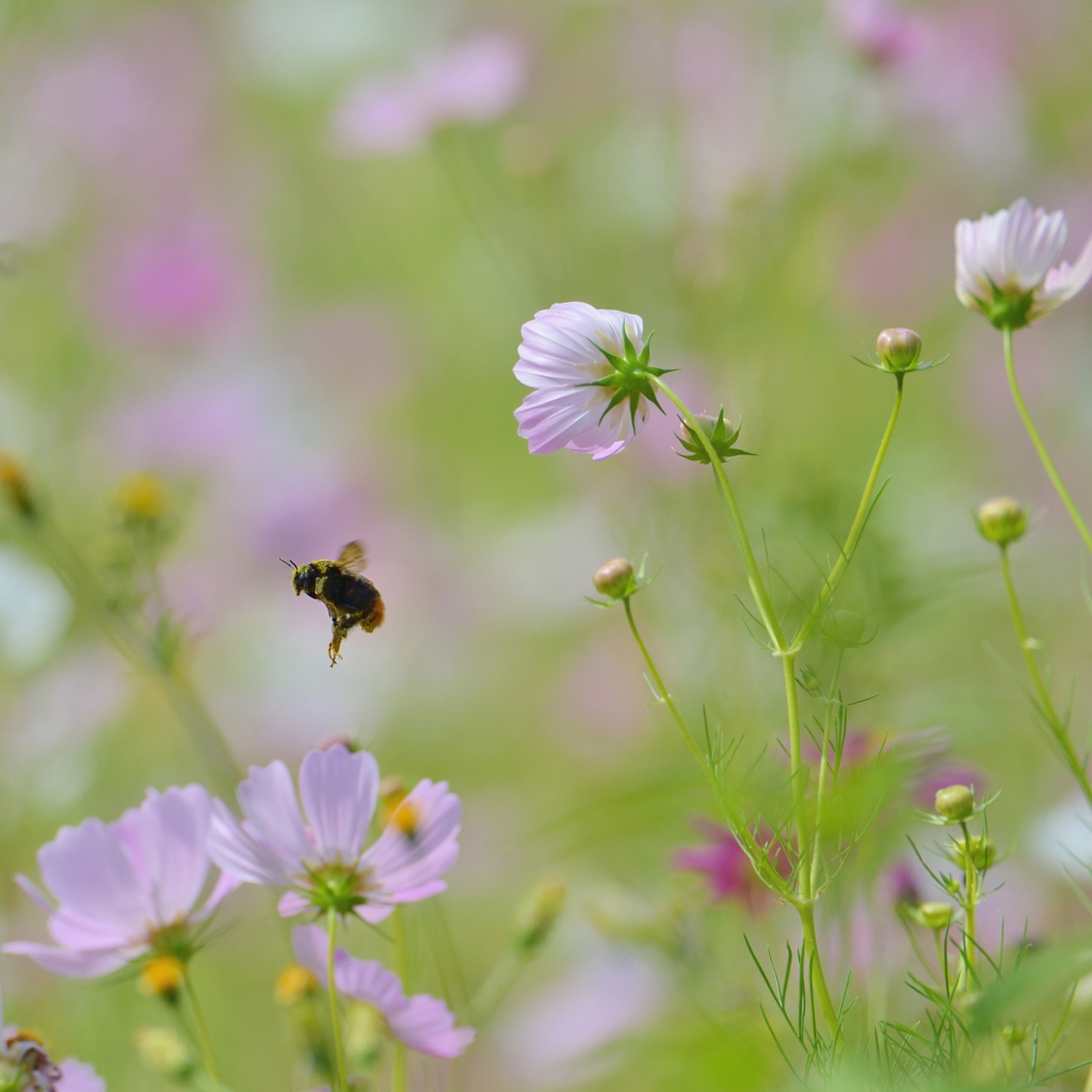 With love from beeⅡ