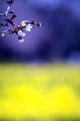 花 冷 え
