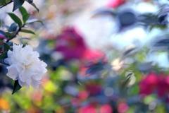 小春日和に咲くⅡ