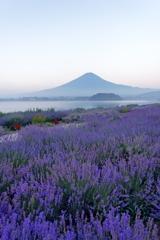 紫蓋の嶺と薫衣草