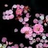 美しや 紅の色なる梅の花~
