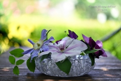 Clematis blooming hill rest