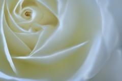 White vortex