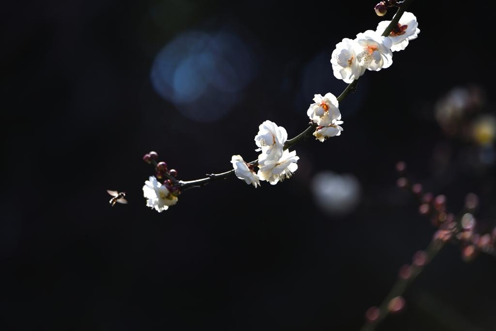 仄かな春信