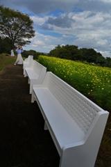 白い椅子とレモン色の花