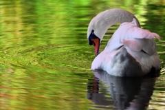 翠緑の水輪