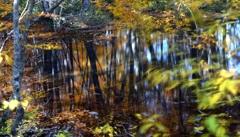 鏡の奥の秋