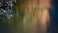 秋影の御射鹿池