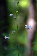 Flower bell ring in the forestⅡ