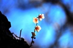 耐雪梅花麗(苦難に耐えて美しく咲く)