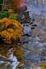 奥志賀雑魚川の秋Ⅱ