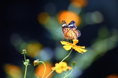 黄花に集う