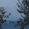 オリーブの見守る海
