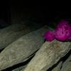 芍薬と古杭