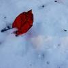 雪に降りた紅い葉