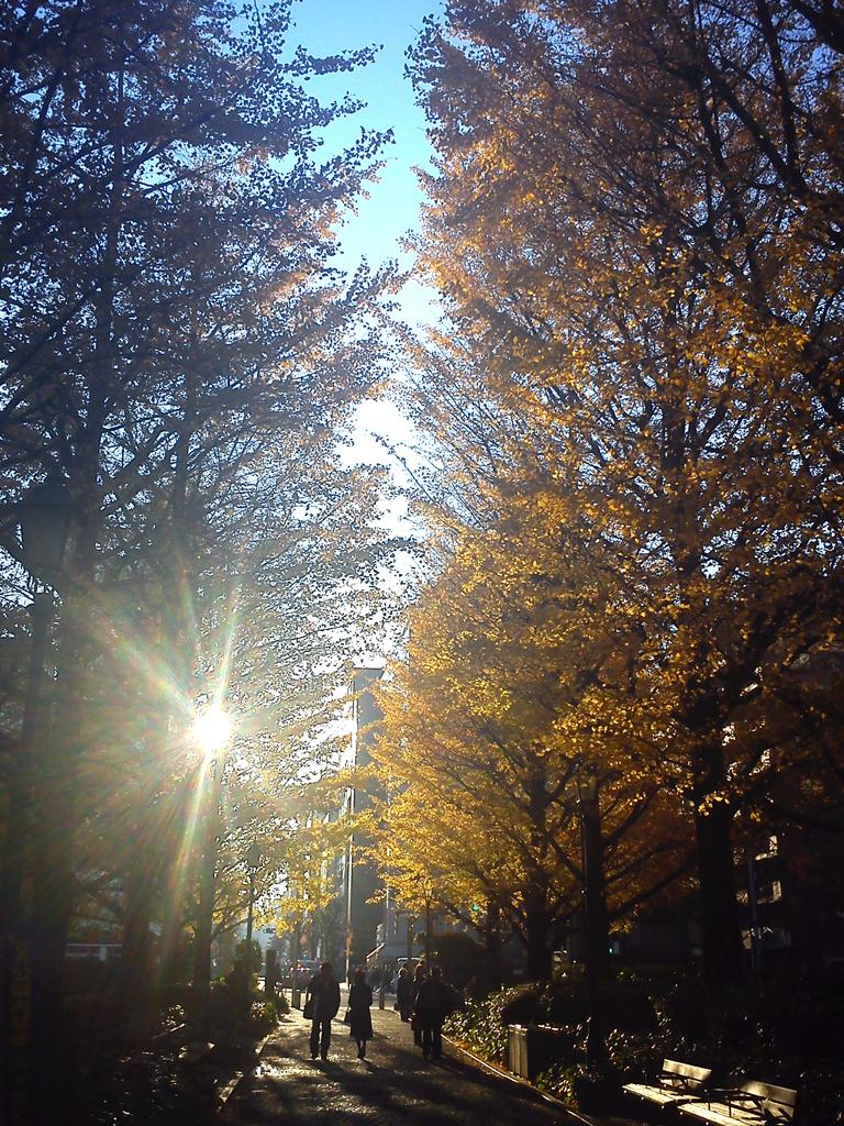 黄金色の銀杏並木道