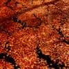 水面に浮かぶ枯紅葉