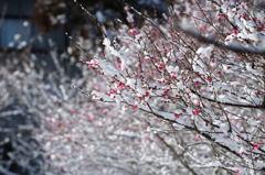 春はすぐそこ♪