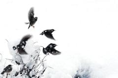 雪中鳥舞図