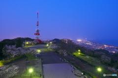 夜桜が似合う丘