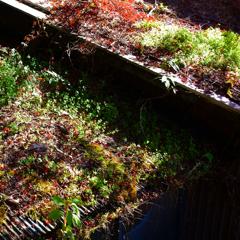 構成-219/ある屋上緑化