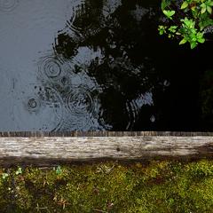 水様-176/苔と黒波紋の境界にて