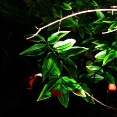 構成-215/静闇と緑葉