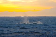 波打つ流氷