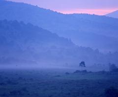 霧の朝・霧ヶ峰