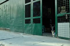 a yangon cat