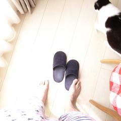 スリッパと猫