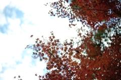 autumn floating